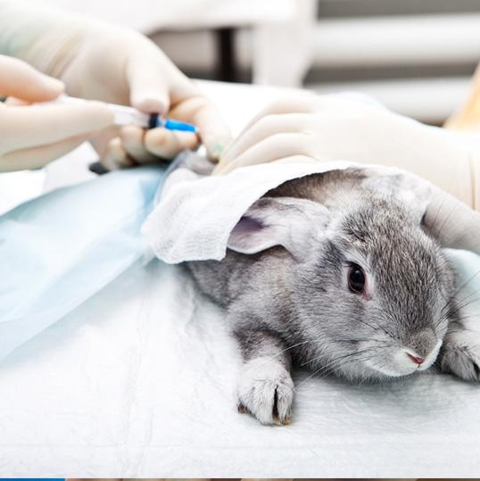Vétérinaire lapin Pornic