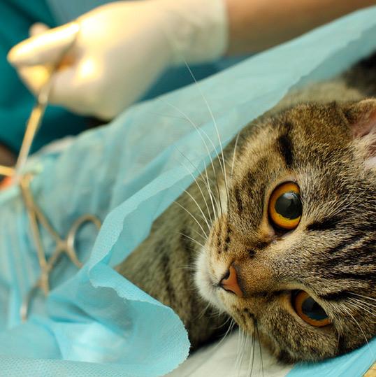 stérilisation des chats sur pornic et à Pays de Retz